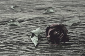 Dried Rose on old wooden background, broken heart concept, vintage style